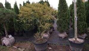 консультации по выбору растений
