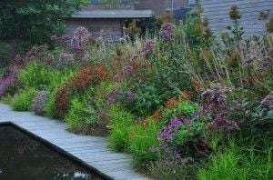 Малоуходный сад