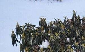 зимостойкость и морозостойкость растений