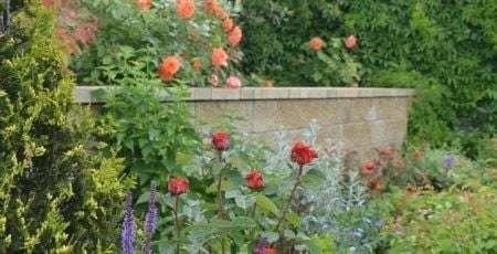 ландшафтный дизайнер сад