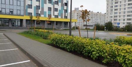 городское озеленение Беларусь